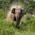 【インドあるある】 寝てたら5人まとめて象に踏まれて死亡