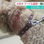 散歩中のプードル犬が土佐犬に襲われる 飼い主は「逆ギレ」