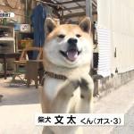 【鳥取】柴犬・文太くんお手柄 女性のピンチ救う