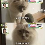 「猫ですら深夜まで働かされるブラック日本」 猫カフェの営業時間延長を承認するニュースにネット驚愕