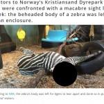 ノルウェーの動物園「シマウマ増えたから子供の前でトラの餌にして喜ばしたろ」