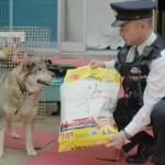 「ご主人を助けて!」 お手柄犬、警察官を誘導 倒れた飼い主救う