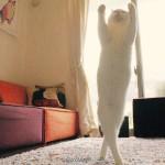 【画像】日本の猫バレエダンサーが世界中で話題に