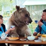 【画像】ロシアの夫婦 巨大な熊と共に生活をしている様子がコレ グリズリーデカすぎワロタ