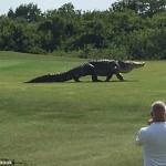 【画像】アメリカのゴルフ場に生息する「ワニ」デカすぎワロタwwwww