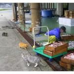 【動画】お魚くわえたドラ猫 漁師にぶん殴られる