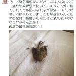 永井浩二「ネズミ捕りの奴が布団のネバネバ部分にコイツが恐らく停車してた」写真パシャー