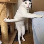 【画像】ネッコ「くっそ爪が引っかかった、一旦布団に寄りかかるで!」