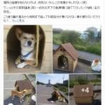 【画像】犬小屋ごと捨てられた犬wwwww