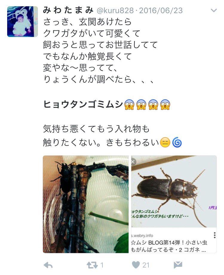 【悲報】ま~んさん、クワガタだと思った虫が別種で手のひらを返す
