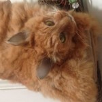 【画像】ニュージーランドの女性、事故死したネコの遺体から頭つきハンドバッグを作る