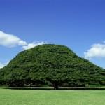 「この木なんの木」の「日立の樹」にかかる維持費 なんと年間5000万円wwwwww