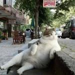 例のトルコの盗まれた猫の像、元の場所に戻る
