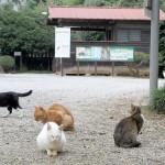 """猫キチが餌だけ与えて放置 神社「勝手に""""猫神社""""とされ困っている。爪で社が壊される。助けて!!」"""