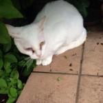 【画像】蓮舫さんのかわいい飼い猫wwww