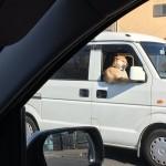 【画像】賢い犬(カシコイーヌ)、発見される