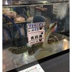 【悲報】ウミガメ、売られる