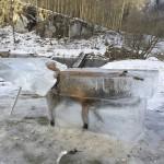 【画像】川に落ちたキツネ、無事に氷結する