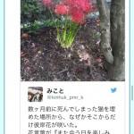 ツイッター女子「猫が死んだ場所に彼岸花咲いた😭」ラブホプランナー「!!!」シュババババ