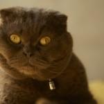 「ネコ」は人間を監視するために送り込まれたエイリアン生物だった?