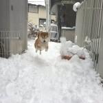 【画像】雪ではしゃぐ犬wwww