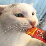 猫を狂わす謎の食品『ちゅ~る』…「狂ったように食べる。何かヤバイものが入ってるんじゃないか」と話題に
