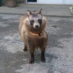 【動画】犬「ボケカスコラァ!柵が開いたらボッコボコにしたるぞ、死ね!」 → 柵ガラガラ → 犬「お、おう…」