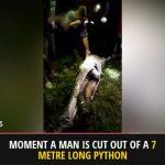 【閲覧注意】行方不明の男性、ニシキヘビの体内で発見