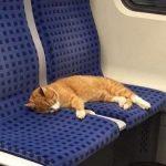 【画像】猫が電車の座席で昼寝してるけど、このままじゃ迷子になっちゃう ⇒ SNSで呼びかけたら飼い主が見つかった!