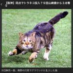 【画像】野球の試合中に乱入したネコwwwwwww