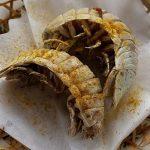 【画像】500円でオオグソクムシ2匹の素揚げを提供 下田海中水族館のレストランで