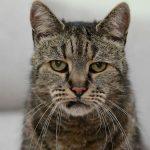 【画像】世界最高齢の猫wwwwww