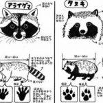 【完全版】タヌキとアライグマの見分けかた