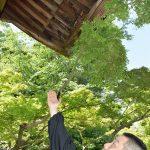 【悲報】アライグマ、数千万円する門を破壊