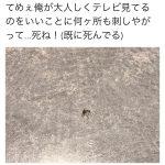 「蚊を殺した」ツイートで永久凍結(BAN) 平成生類憐みの令か