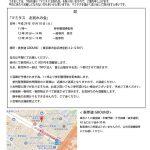 【悲報】中川翔子さん、マミタスお別れ会を実施 ※献花代500円徴収