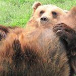 【画像】エッチな開脚ポーズで誘惑するいやらしいクマさん