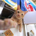 【画像】猫の番台さん