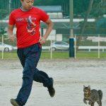 【画像】 野良ネコが野球部員の練習グラウンドに現れた結果wwwww