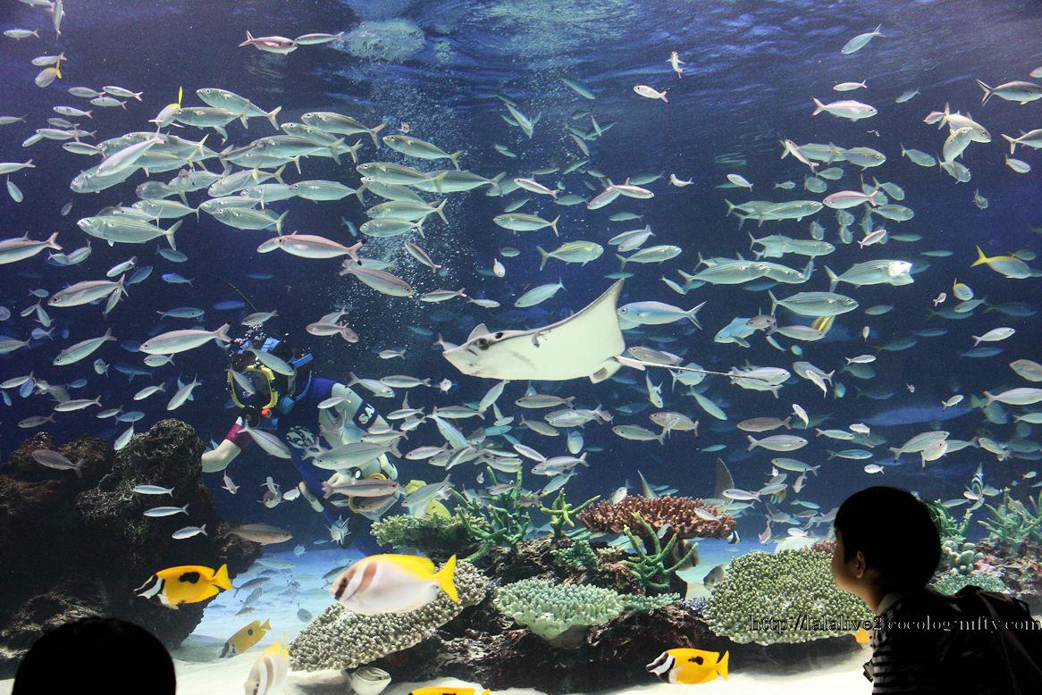 【画像】魚が1235匹死んだ池袋サンシャイン水族館の現在の様子wwwww