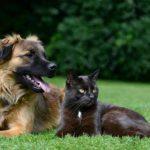 犬、猫の倍賢いことが判明