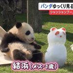 和歌山県知事「あの、和歌山にもパンダいるんですけど」