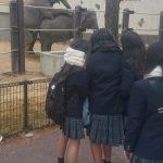 【画像】ゾウさん、JKの前でおっ始めるwwww