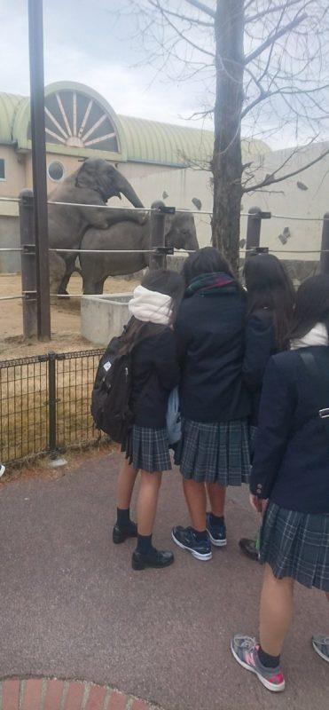 【画像】ゾウさん、JKの前でおっ始める