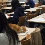 【悲報】にゃんさん、大学の講義中に堂々と居眠り