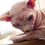 【閲覧注意】凄く気持ちの悪いネコが発見される