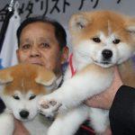 【画像】ロシアのザギトワさんに贈られる秋田犬お披露目「まさに秋田美人です」