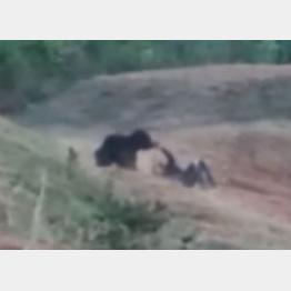 彡(^)(^)「熊おった!2ショット撮ってインスタにあげたら大ウケやろなぁw」→