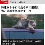 【画像】猫さん、時速96キロで走る車の上、猛烈な向かい風に耐える