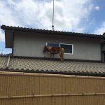 【画像】洪水で流された馬、民家の屋根の上で見つかる